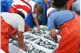 Pescado y marisco de las mejores lonjas nacionales, pescado artesanalmente y cuidando el ciclo natural marino. Los mejores proveedores de comida ecólógica ofrecida por Genuinus.